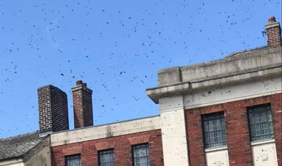 انتشار النحل