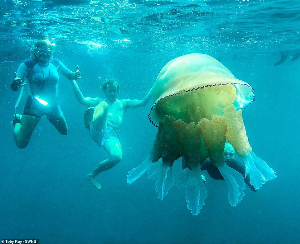 قنديل بحر ضخم  (3)