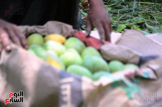 المانجو-فاكهة-الصيف-المفضلة-(11)