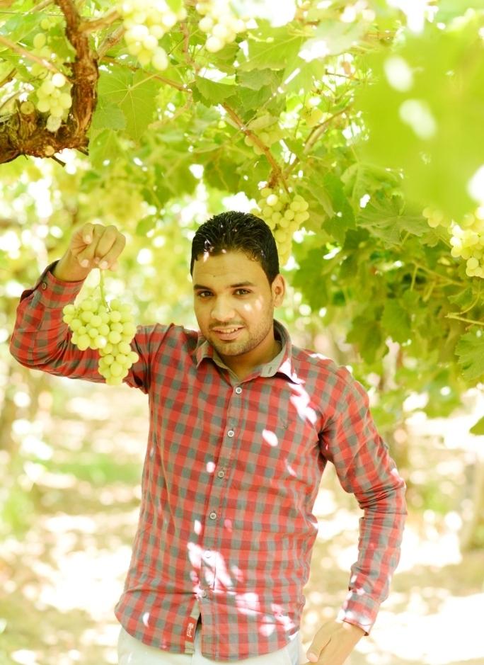 محصول العنب بالأقصر يبدأ في الظهور بالأسواق مع دخول الصيف (20)