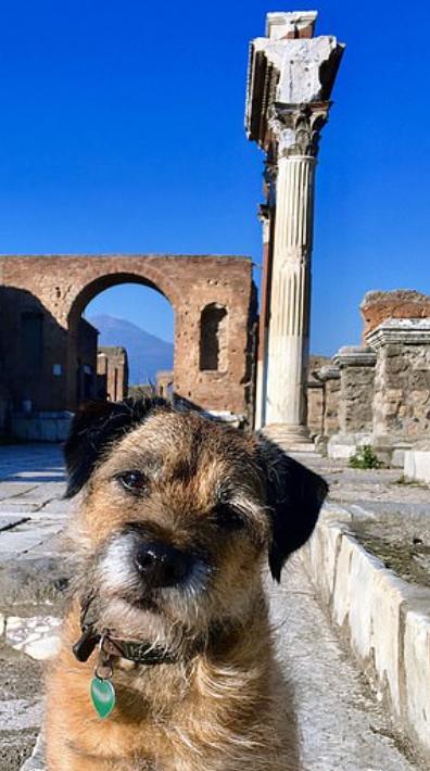 الكلب فى أوروبا
