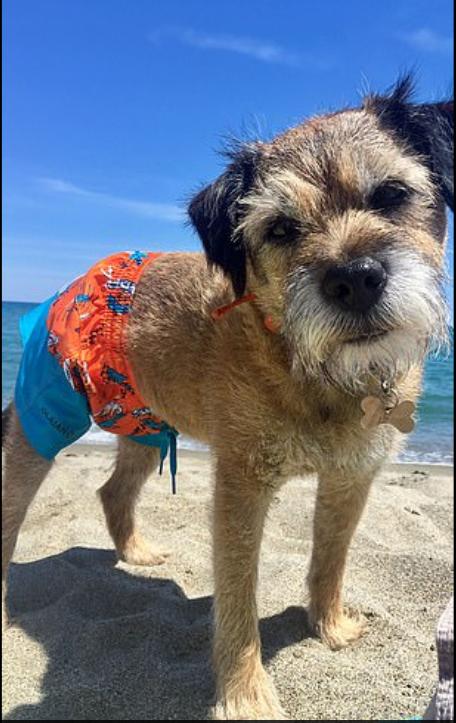 الكلب على شواطئ أوروبا