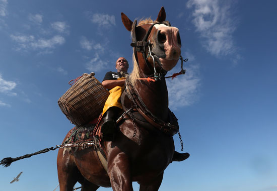 Closeup picture of a horse rider