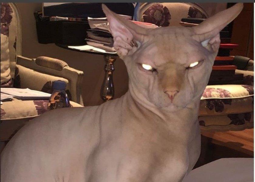 قطة ياسمين عبد العزيز من سلالة سفنكس