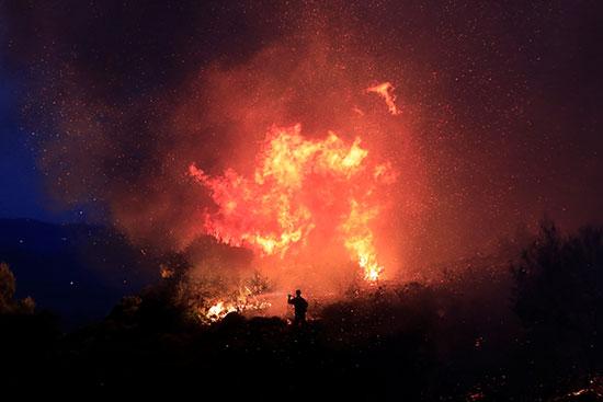 النيران تلتهم النباتات