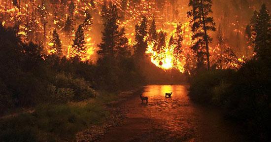 حرائق غابات أيفيا اليونانية
