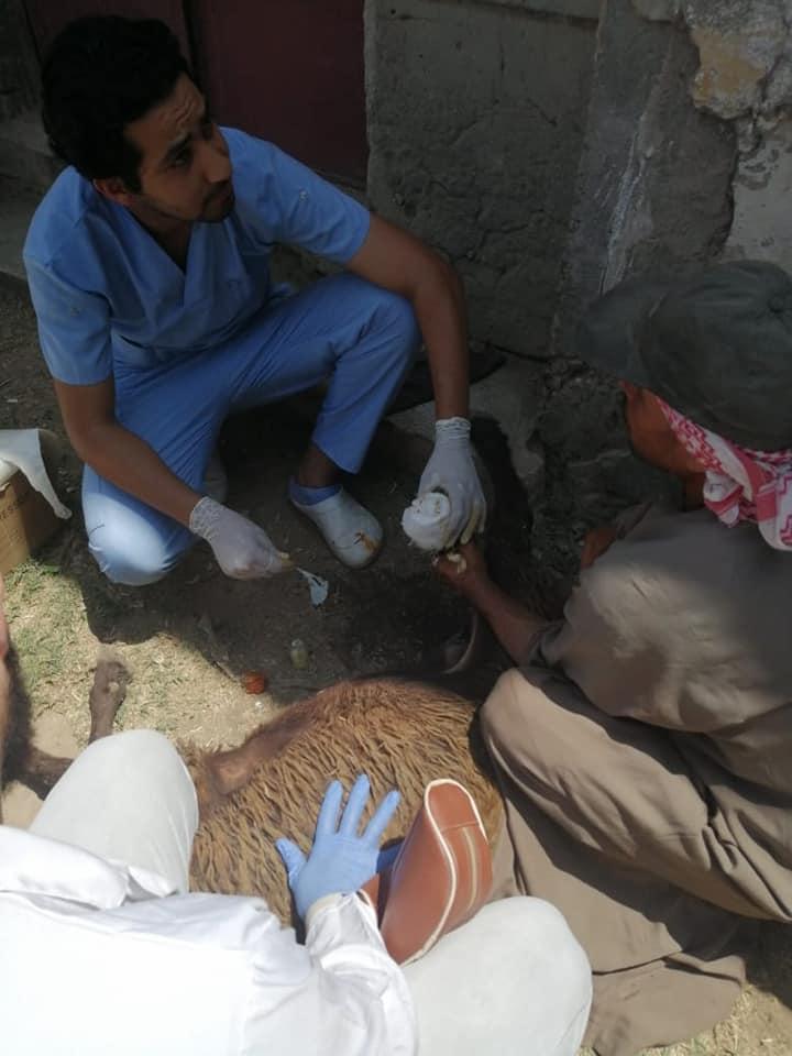 تحصين الماشية وحملة مشتركة بين كلية طب بيطري ومديرية الطب البيطري بكفر الشيخ  (4)