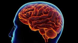 نم الدماغ