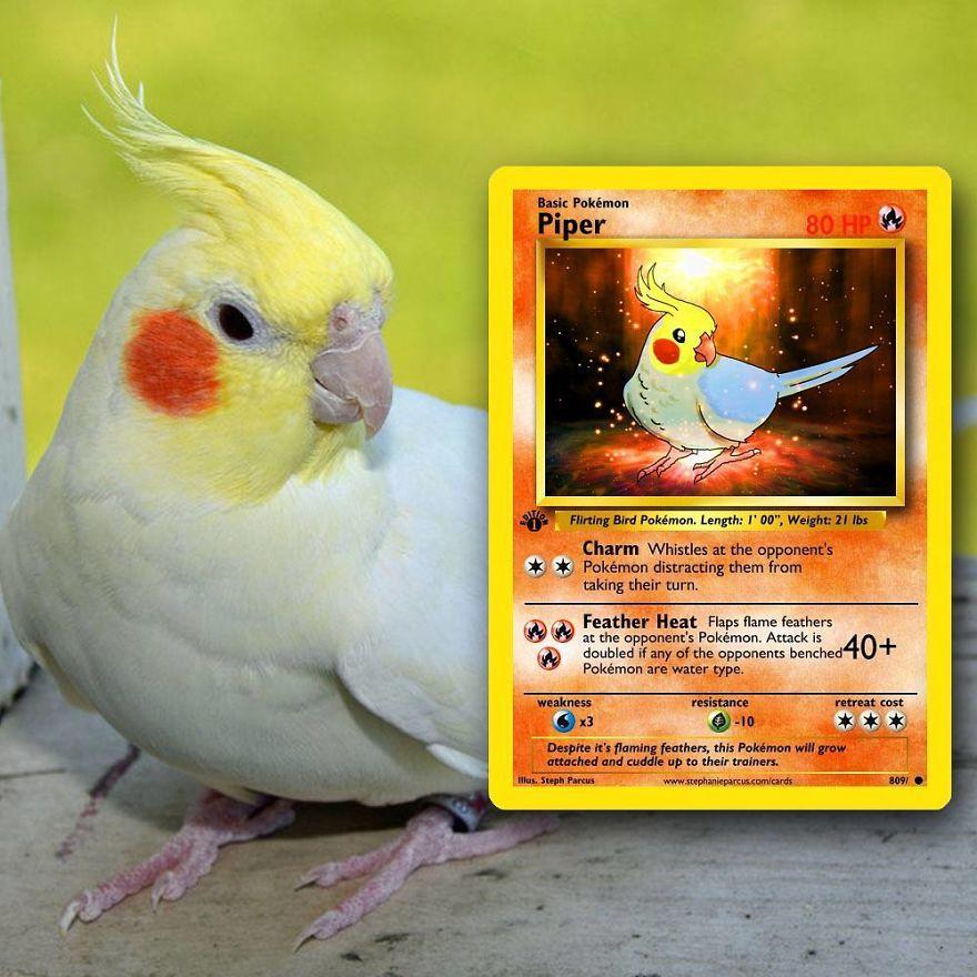 Pokémon Cards 9