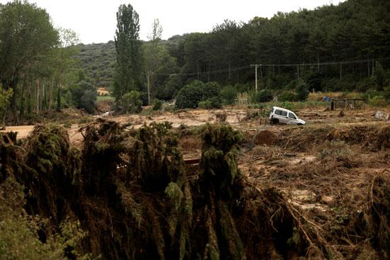 الغابات-بعد-الفيضانات