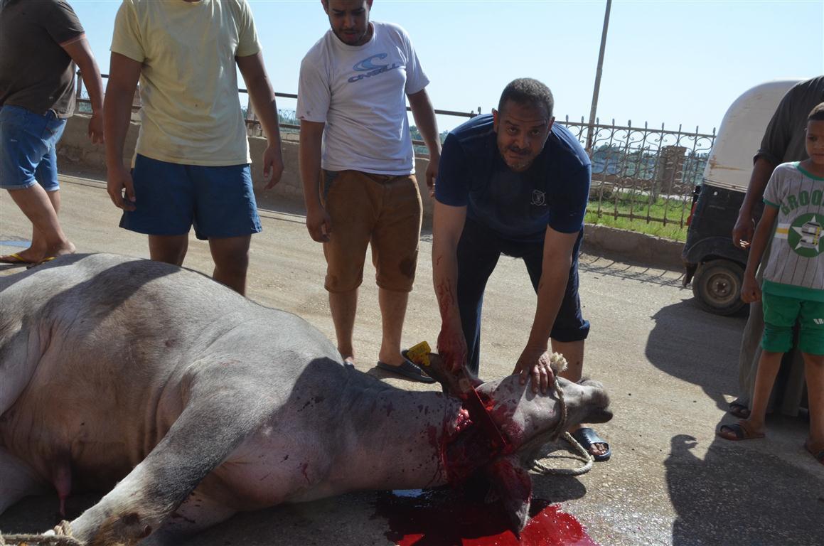 أهالي الأقصر يواصلون ذبح أضاحي العيد لليوم الثاني لتوزيع اللحوم علي الفقراء والأقارب (1)