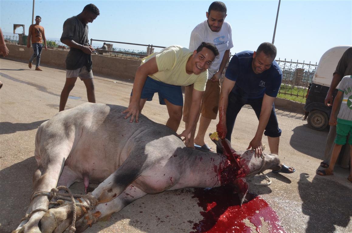 أهالي الأقصر يواصلون ذبح أضاحي العيد لليوم الثاني لتوزيع اللحوم علي الفقراء والأقارب (2)