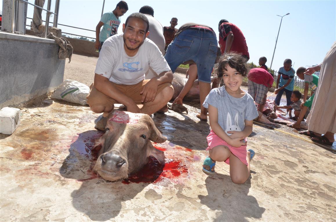 أهالي الأقصر يواصلون ذبح أضاحي العيد لليوم الثاني لتوزيع اللحوم علي الفقراء والأقارب (7)