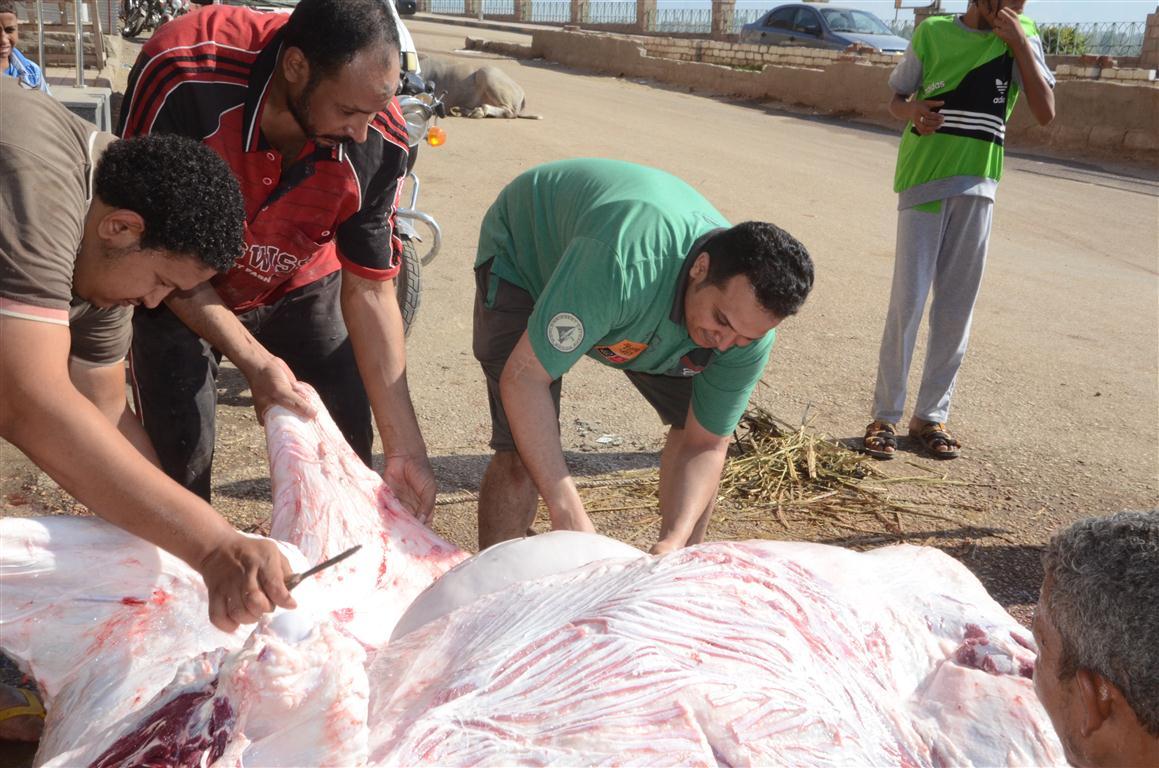 أهالي الأقصر يواصلون ذبح أضاحي العيد لليوم الثاني لتوزيع اللحوم علي الفقراء والأقارب (13)