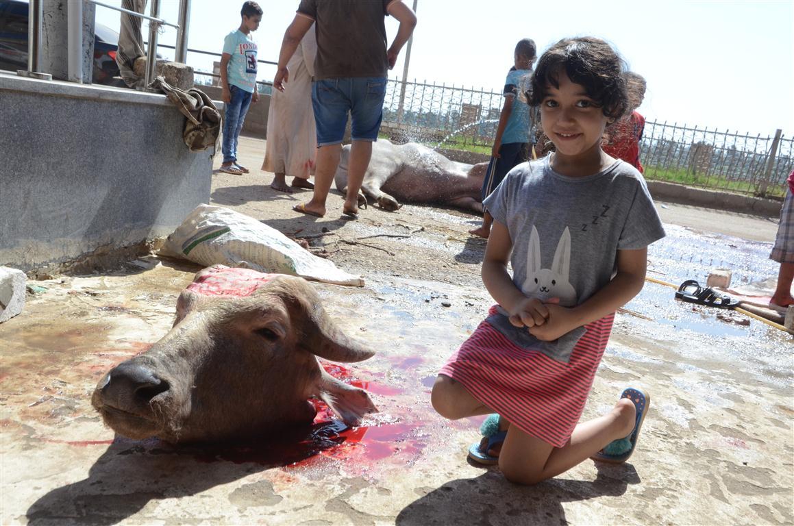 أهالي الأقصر يواصلون ذبح أضاحي العيد لليوم الثاني لتوزيع اللحوم علي الفقراء والأقارب (6)