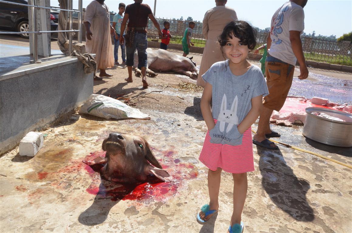 أهالي الأقصر يواصلون ذبح أضاحي العيد لليوم الثاني لتوزيع اللحوم علي الفقراء والأقارب (5)