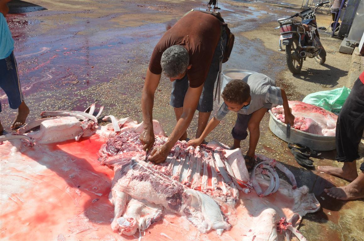أهالي الأقصر يواصلون ذبح أضاحي العيد لليوم الثاني لتوزيع اللحوم علي الفقراء والأقارب (4)