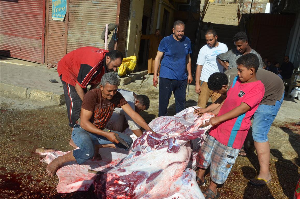أهالي الأقصر يواصلون ذبح أضاحي العيد لليوم الثاني لتوزيع اللحوم علي الفقراء والأقارب (11)