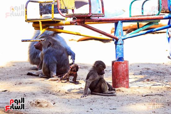 القردة الام تداعب طفلها