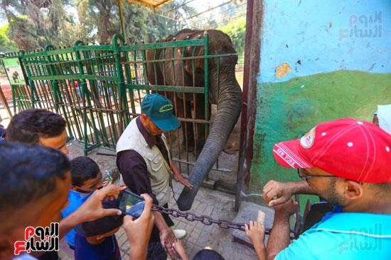الاطفال مع الفيل