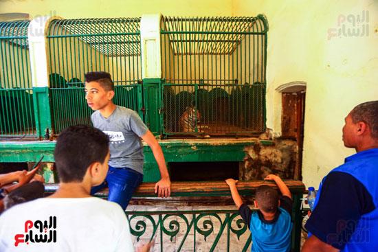 طفل يتصور مع الاسد