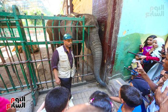 الفيل يدعب الاطفال