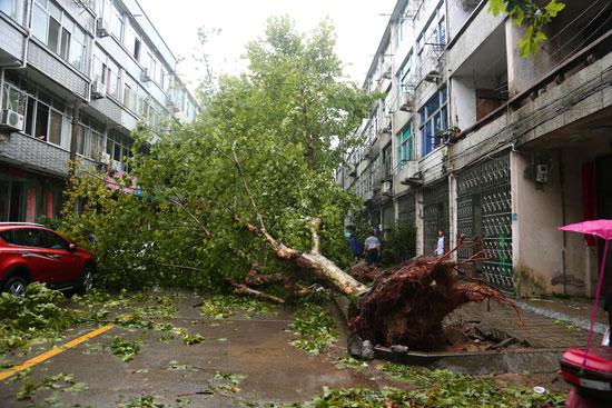 سقوط-الأشجار