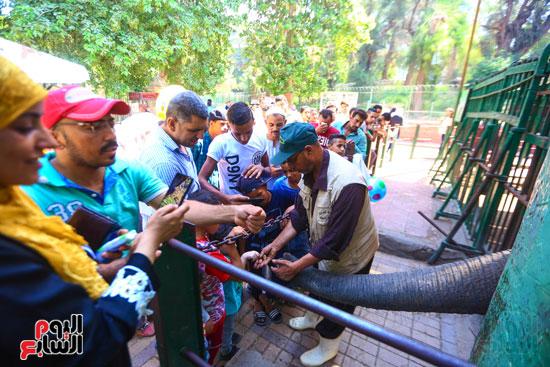 زلومة الفيل تداعب الاطفال