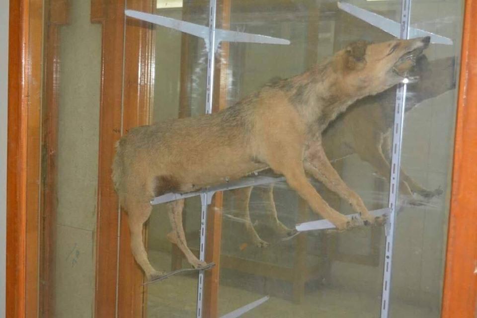 متحف الحيوانات بكلية العلوم  (18)