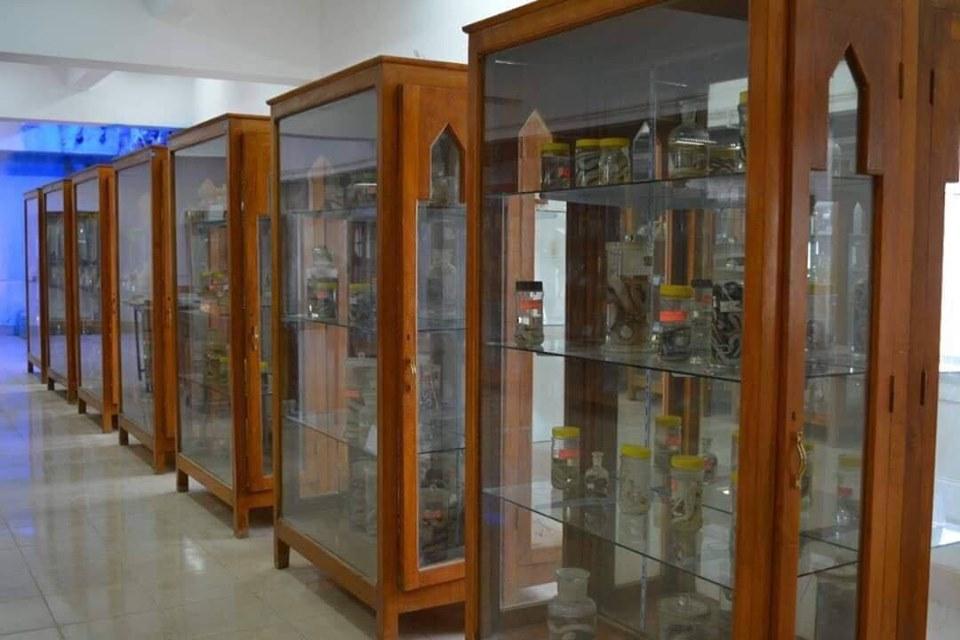 متحف الحيوانات بكلية العلوم  (13)