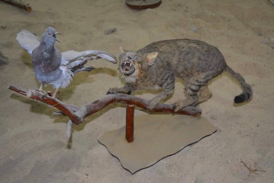متحف الحيوانات بكلية العلوم  (15)