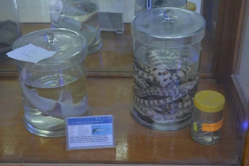 متحف الحيوانات بكلية العلوم  (3)