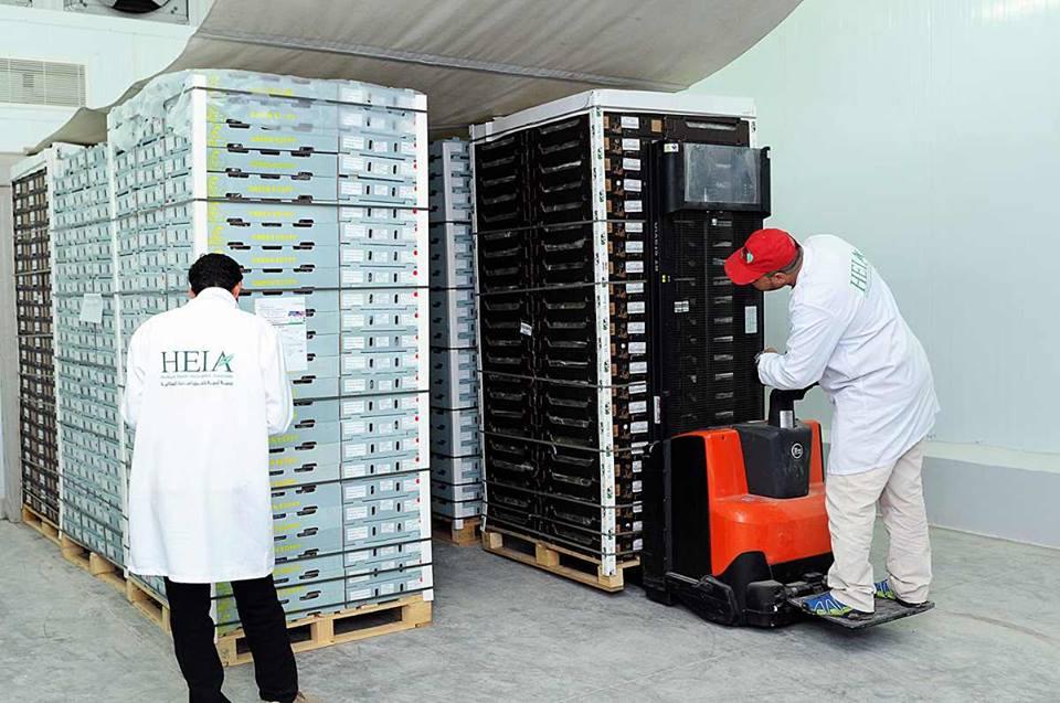 الأقصر تجهز محاصيلها الزراعية لتصديرها للخارج في محطتين للتعبئة والفرز والتغليف (5)