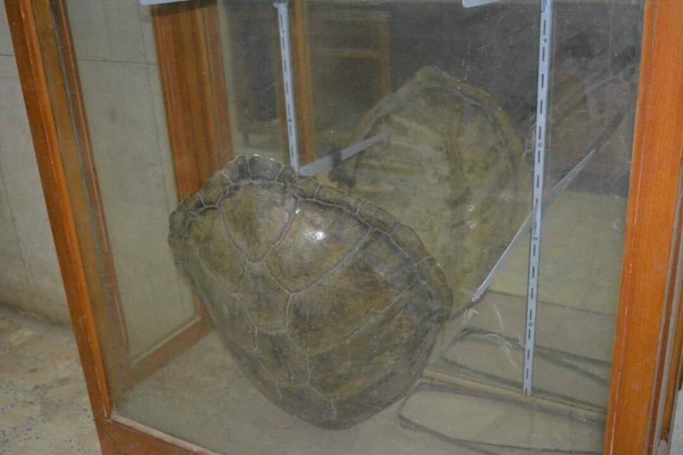 متحف الحيوانات بكلية العلوم  (22)