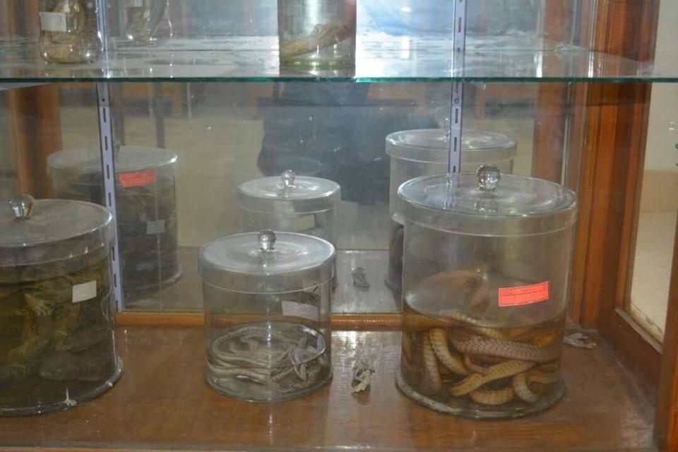 متحف الحيوانات بكلية العلوم  (19)