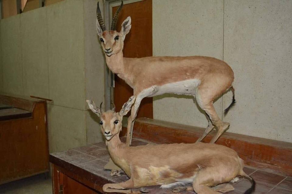 متحف الحيوانات بكلية العلوم  (20)