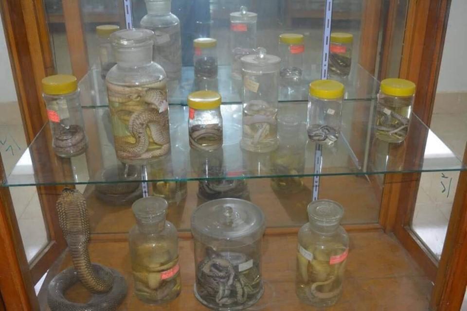 متحف الحيوانات بكلية العلوم  (7)