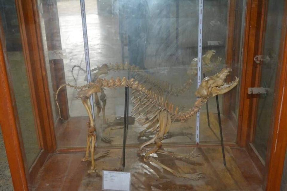 متحف الحيوانات بكلية العلوم  (9)