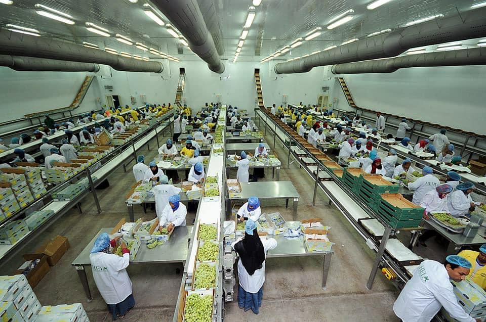 الأقصر تجهز محاصيلها الزراعية لتصديرها للخارج في محطتين للتعبئة والفرز والتغليف (12)
