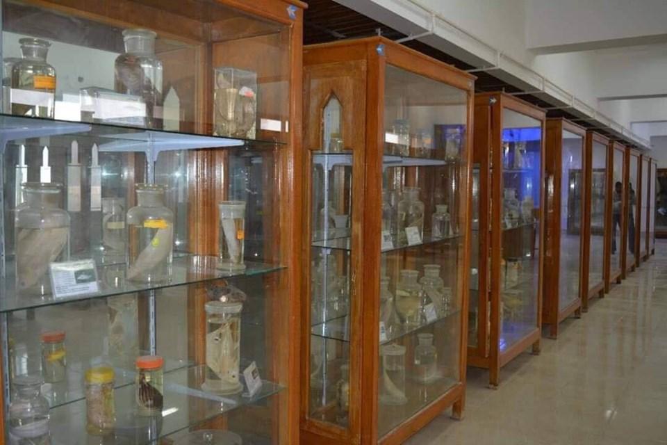 متحف الحيوانات بكلية العلوم  (5)