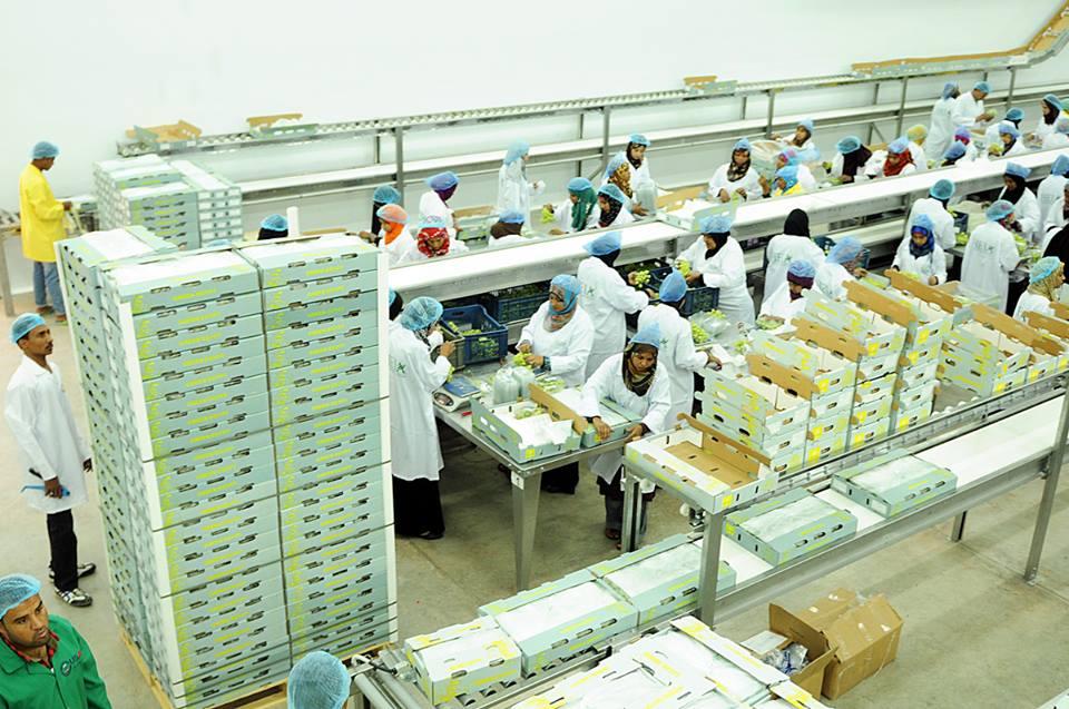 الأقصر تجهز محاصيلها الزراعية لتصديرها للخارج في محطتين للتعبئة والفرز والتغليف (19)