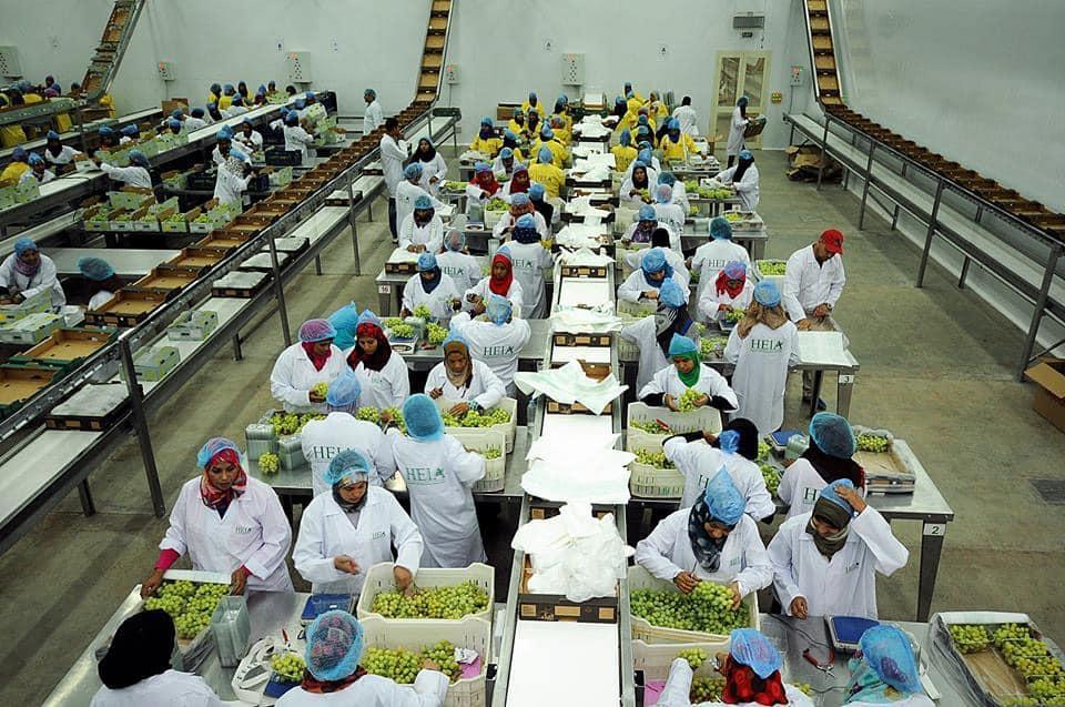 الأقصر تجهز محاصيلها الزراعية لتصديرها للخارج في محطتين للتعبئة والفرز والتغليف (8)