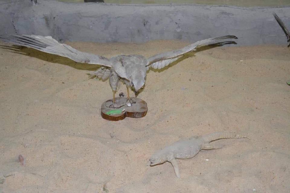 متحف الحيوانات بكلية العلوم  (1)
