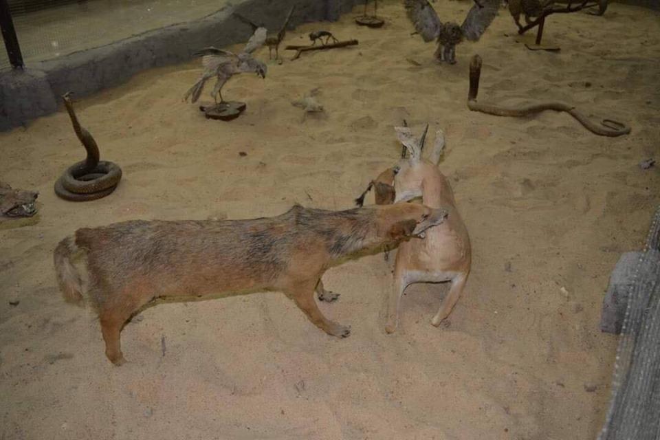 متحف الحيوانات بكلية العلوم  (23)