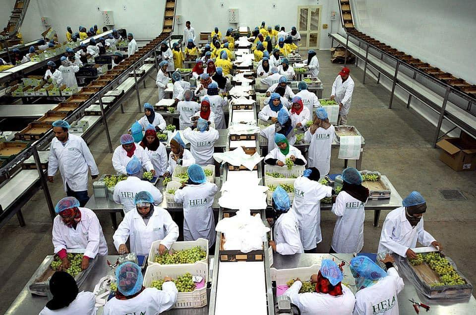 الأقصر تجهز محاصيلها الزراعية لتصديرها للخارج في محطتين للتعبئة والفرز والتغليف (13)
