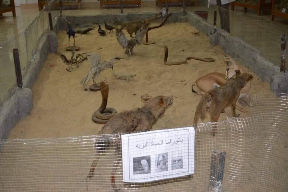 متحف الحيوانات بكلية العلوم  (21)