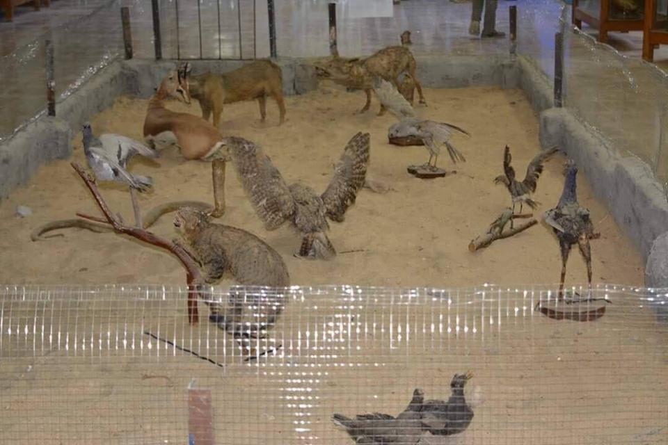 متحف الحيوانات بكلية العلوم  (12)