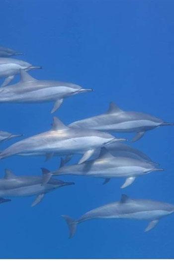 الدلافين (4)