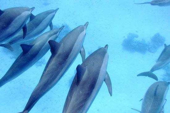 الدلافين (6)