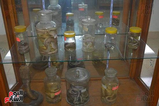 أنواع-مختلفة-من-الثعابين-داخل-المتحف
